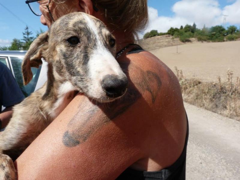 Zoé – Adorable galguita Scooby France –Adoptée !  Zoa_ga14