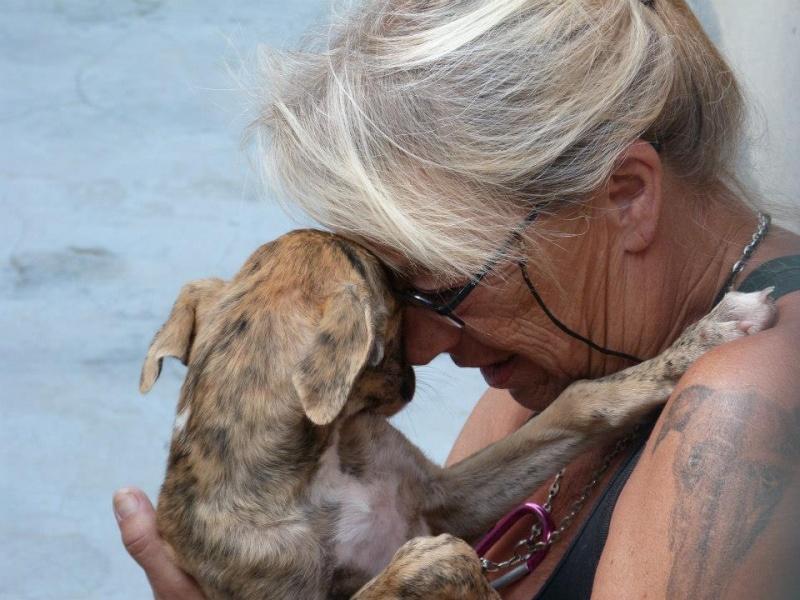 Zoé – Adorable galguita Scooby France –Adoptée !  Zoa_ga17