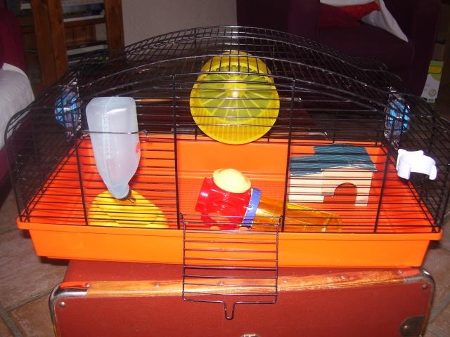 Cage pour souris (69,81,31 + poste) 100_3837