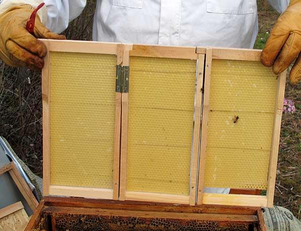 plans pour faire des ruchettes acordéon.  A117