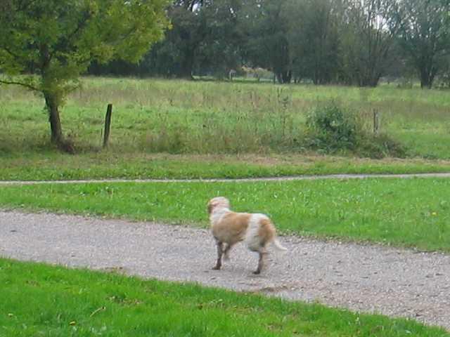 Un dimanche en automne en Bresse - Page 2 Couche11