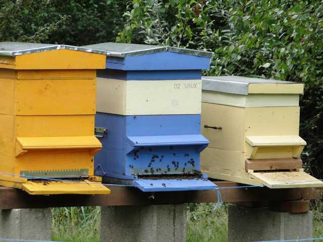 Abeilles  en attente devant la ruche. Dsc01612
