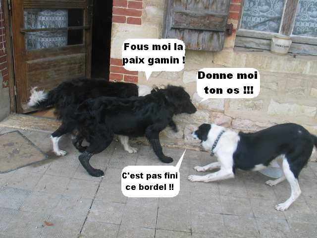 Chats, chiens... - Page 5 Img_1527