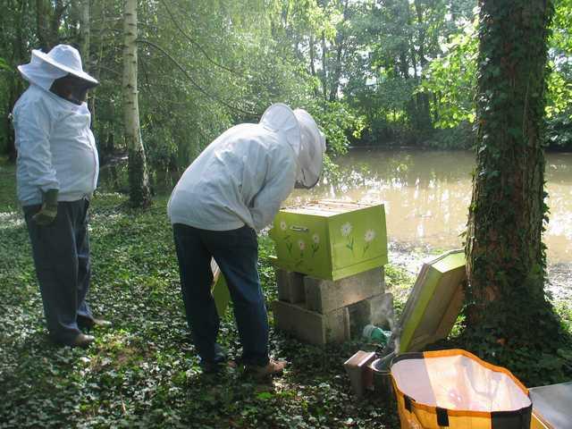 La ruche n°12 Img_2122