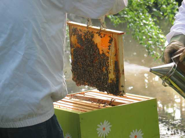 La ruche n°12 Img_2123