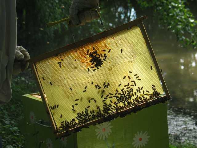 La ruche n°12 Img_2124