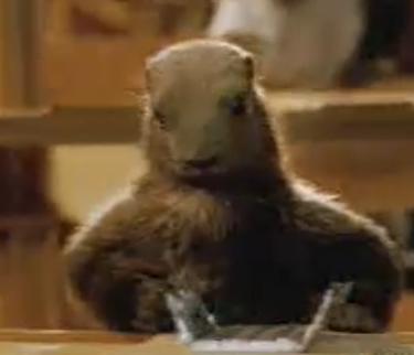 LES LEGUMES ANCIENS OU OUBLIES - Page 3 Marmot10