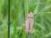 Lépidoptères (papillons, hétérocères,  rhopalocères etc..)