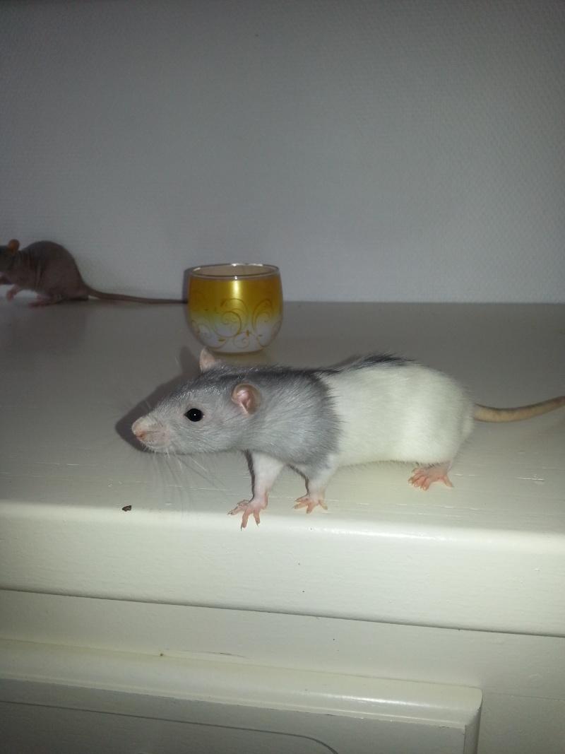 Mes ptits gars des Rat-valets 20140716