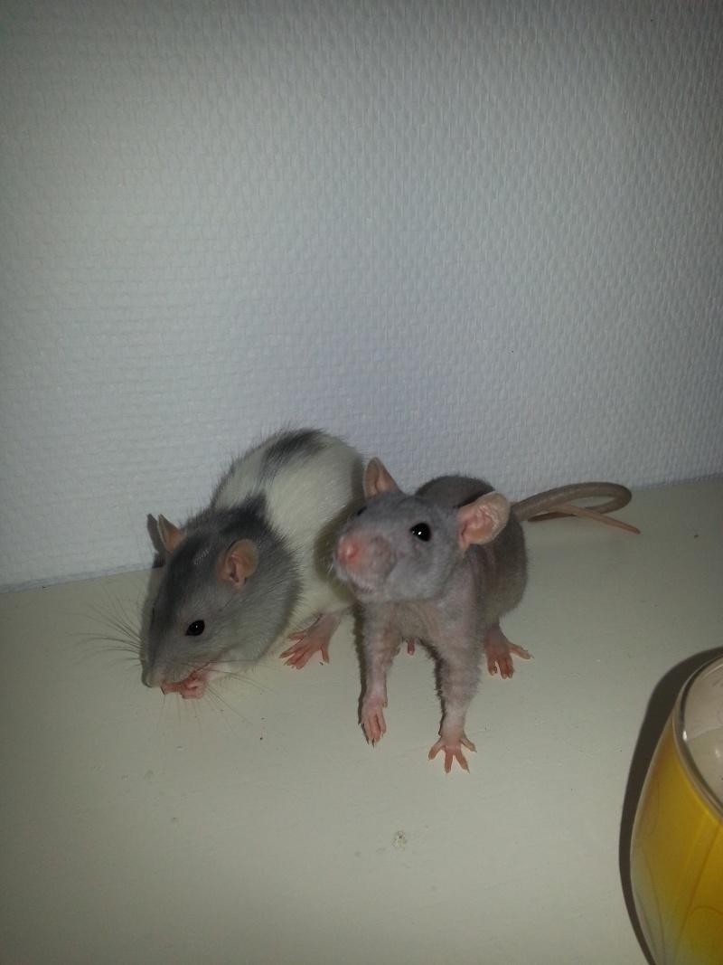 Mes ptits gars des Rat-valets 20140718