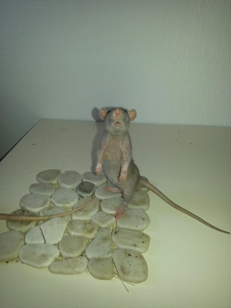 Mes ptits gars des Rat-valets 20140721