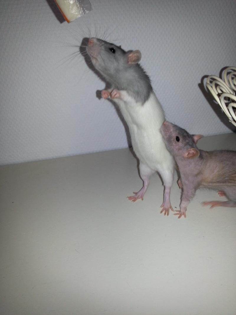 Mes ptits gars des Rat-valets 20140810
