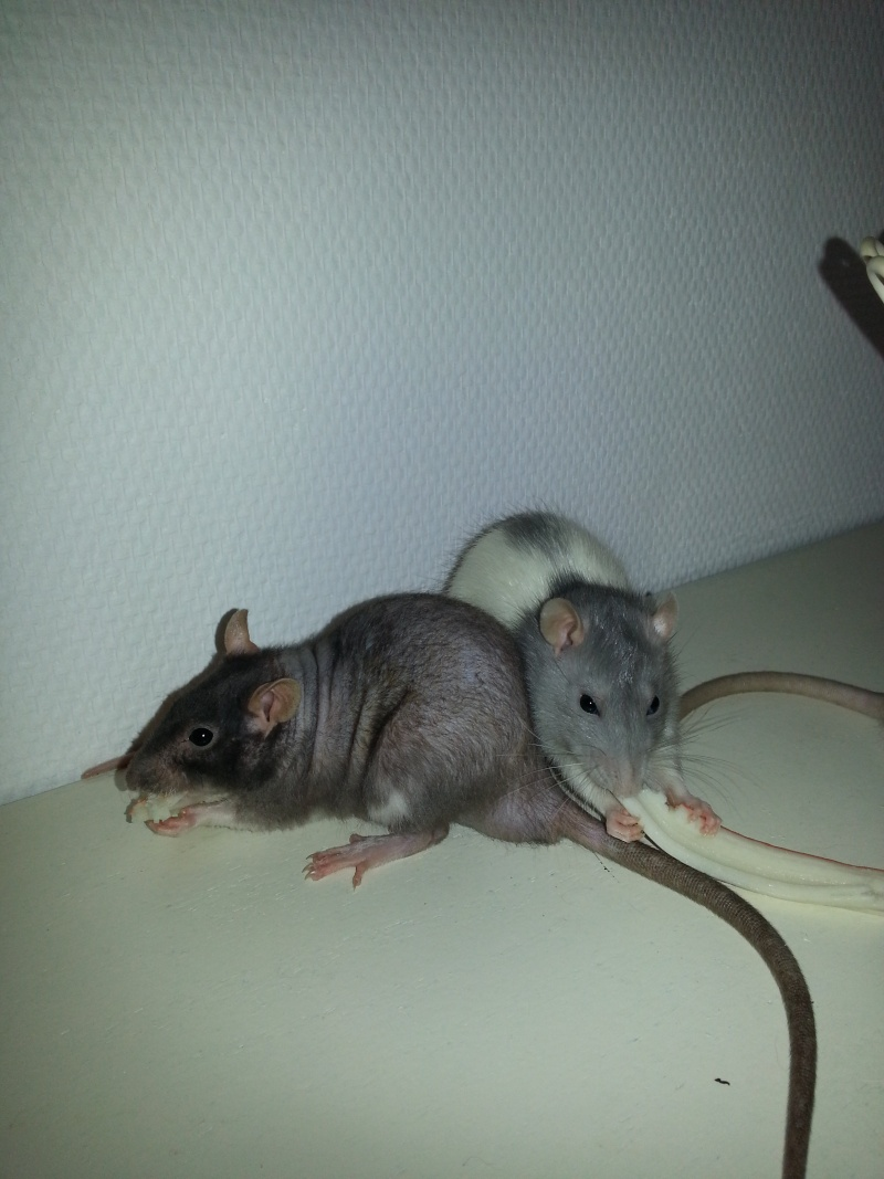 Mes ptits gars des Rat-valets 20140811