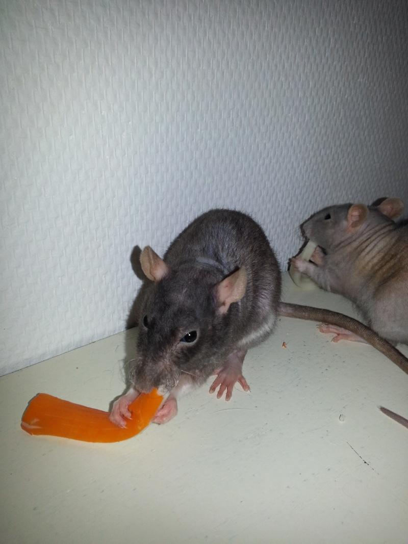 Mes ptits gars des Rat-valets 20140812