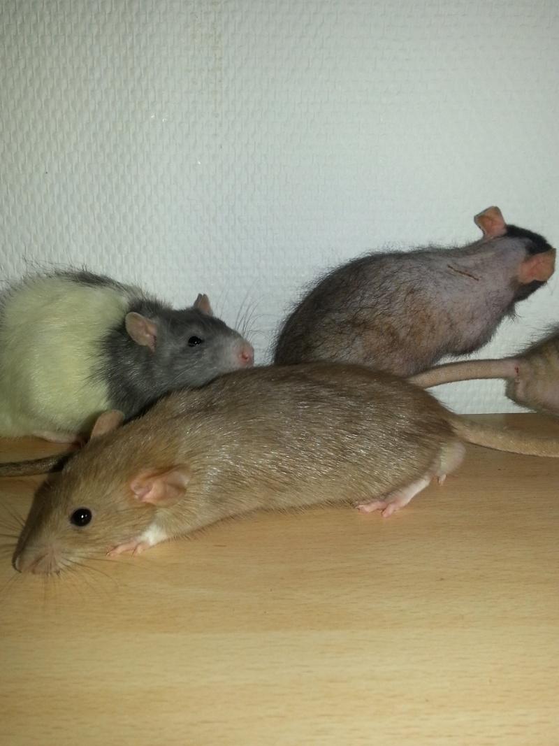 Mes ptits gars des Rat-valets - Page 2 20140911