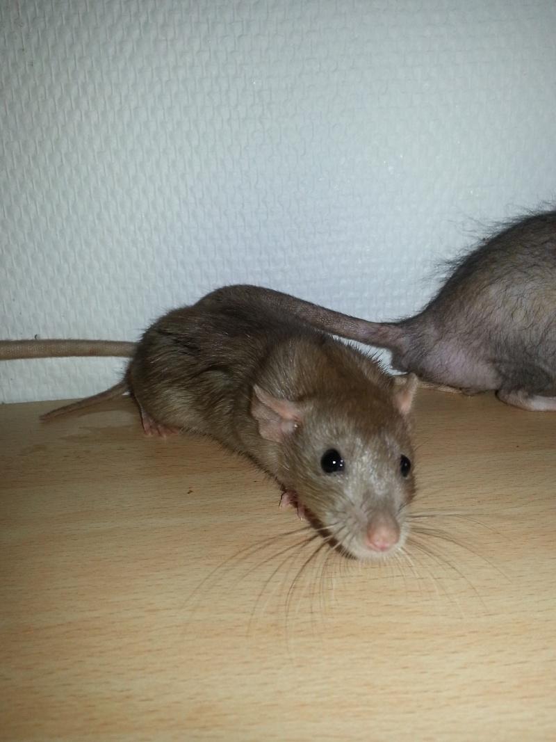 Mes ptits gars des Rat-valets - Page 2 20140912
