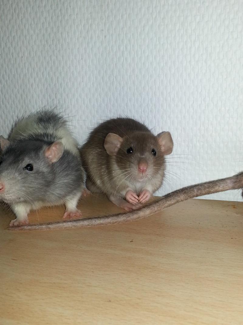 Mes ptits gars des Rat-valets - Page 2 20140915