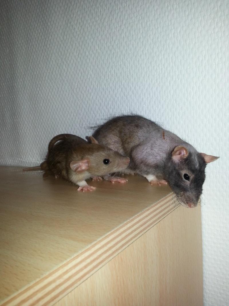Mes ptits gars des Rat-valets - Page 2 20140916