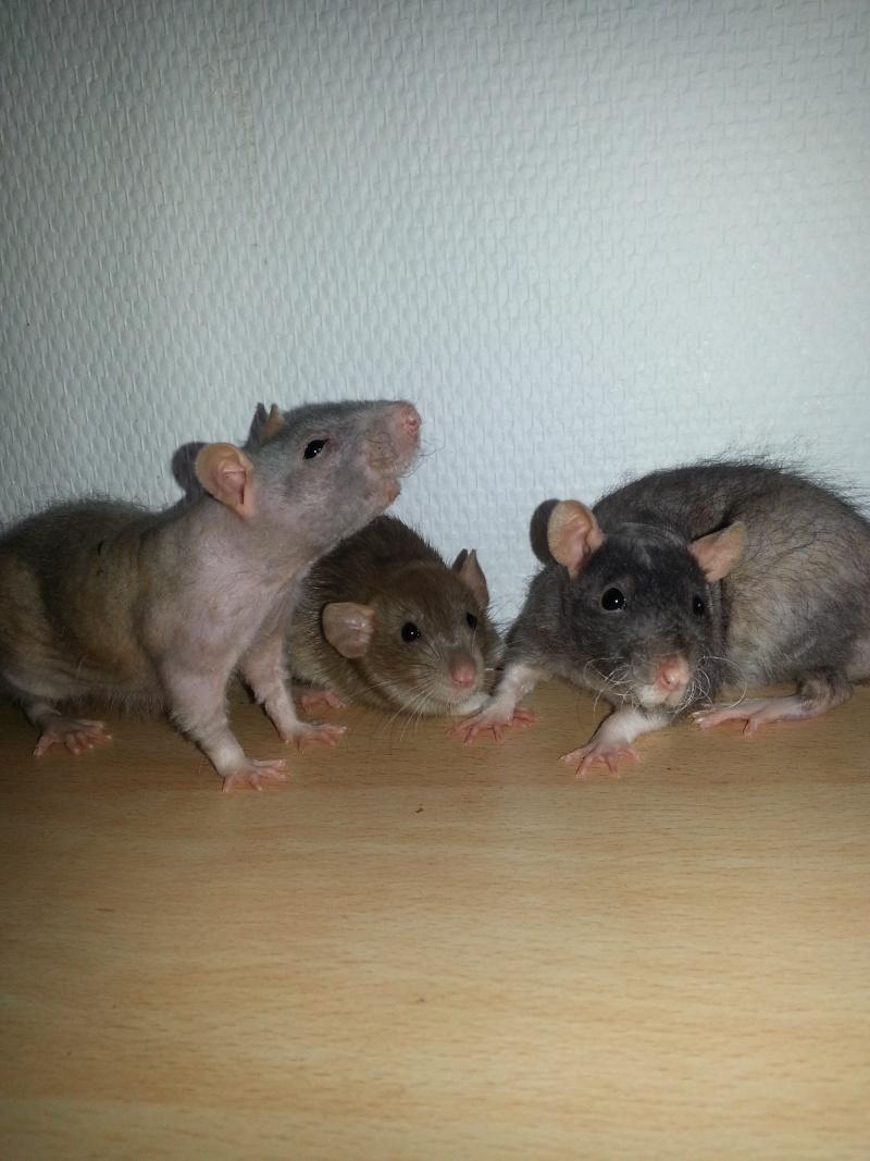 Mes ptits gars des Rat-valets - Page 2 20140917