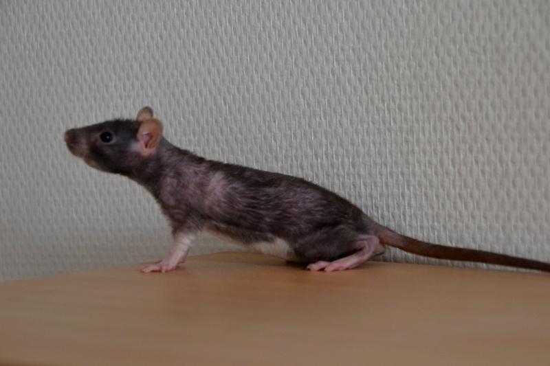 Mes ptits gars des Rat-valets Dsc_0411