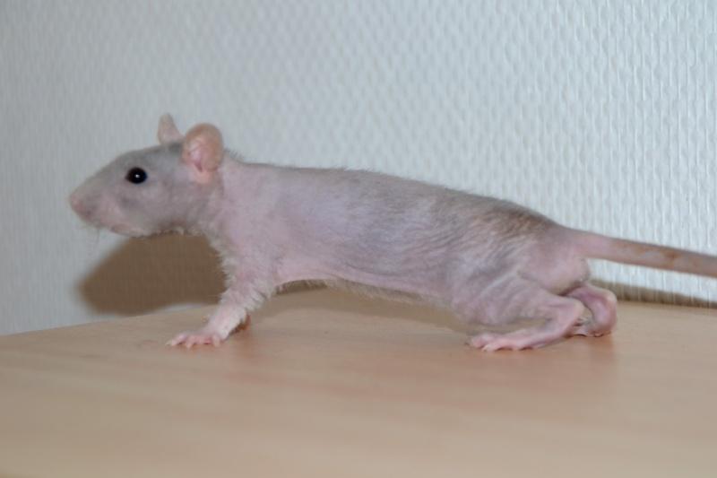 Mes ptits gars des Rat-valets Dsc_0412