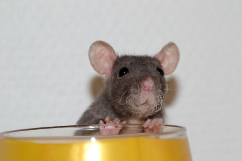 Mes ptits gars des Rat-valets Dsc_0413