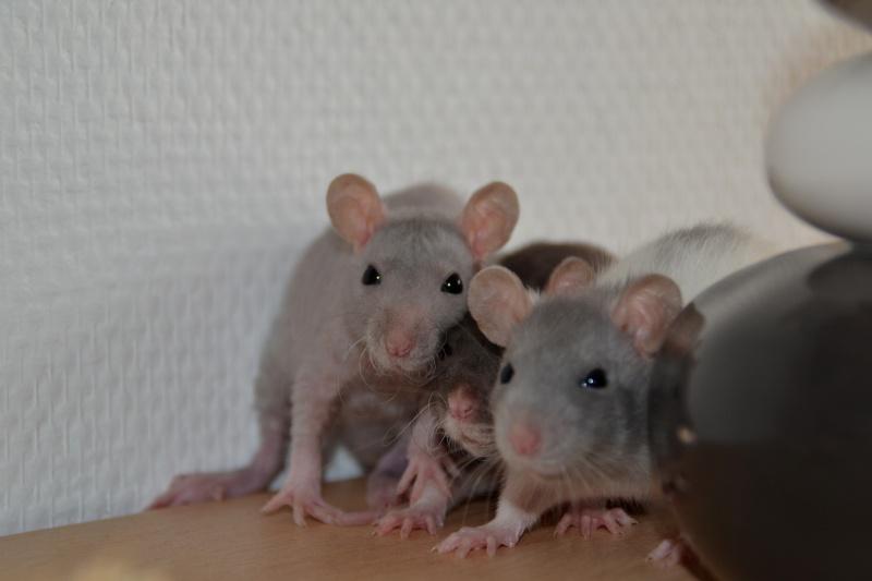 Mes ptits gars des Rat-valets Dsc_0418