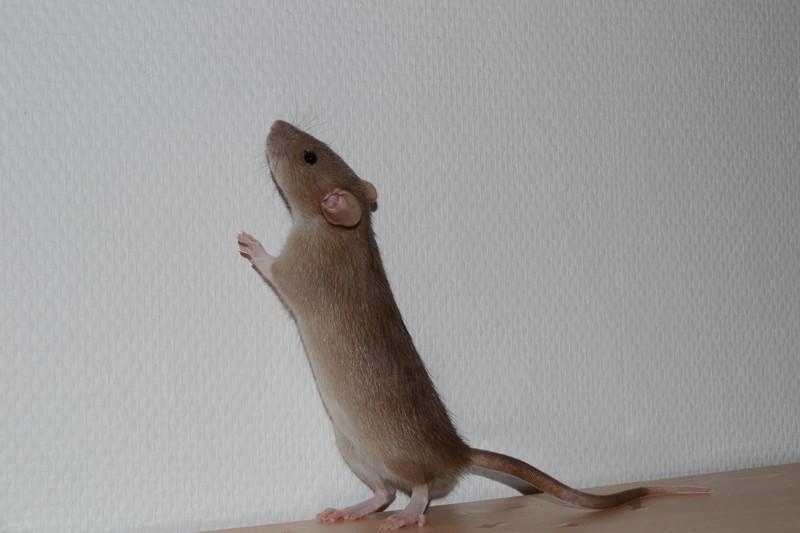 Mes ptits gars des Rat-valets - Page 3 Dsc_0512