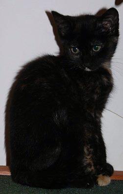 Feuille et Loup, chatons 2.5mois à aimer Feuill10