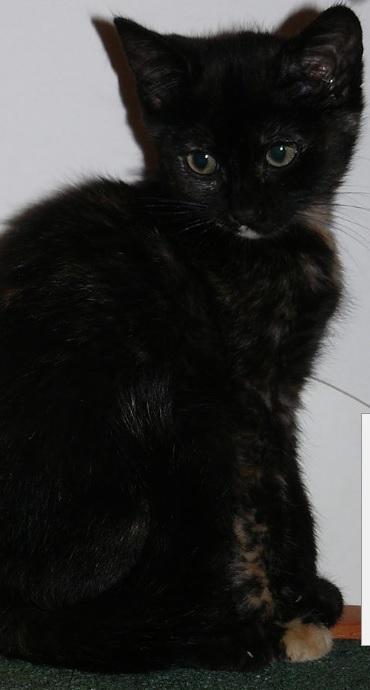 Feuille, une adorable grande soeur (93) Feuill14