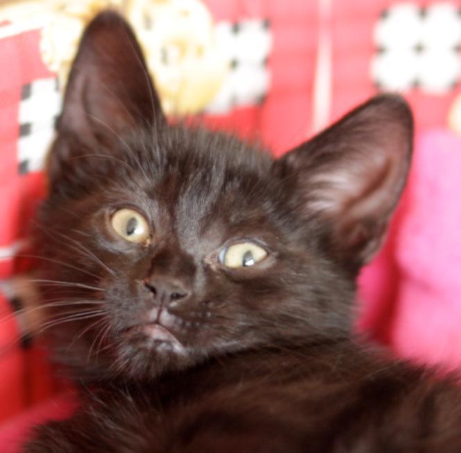 chatons Gaspar11
