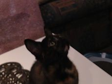 Olivia, douce petite miniature  Olivia11