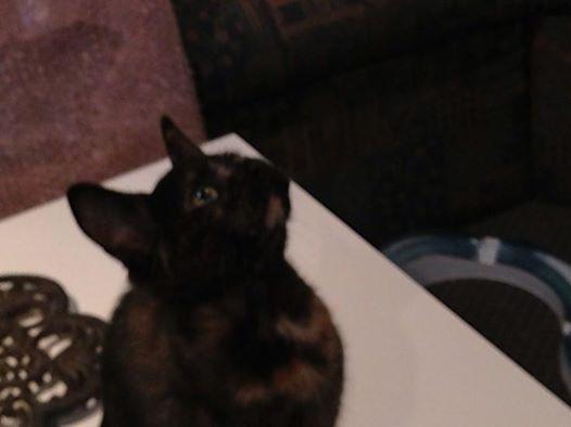 Olivia, douce petite miniature  Olivia12