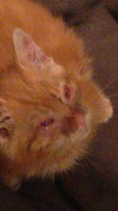 Pumpkin, abandonné, malade, grosse conjonctivite Pumpki17