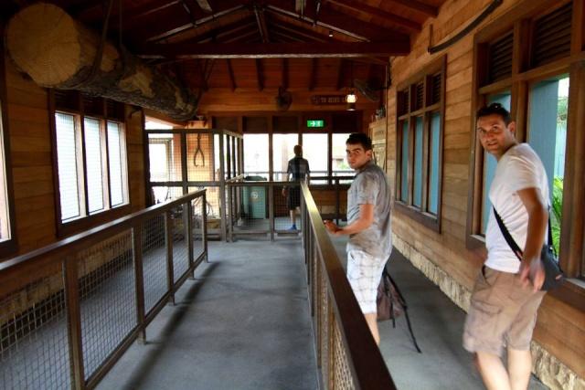 A la découverte d'Hong Kong Disneyland Resort : mes impressions Grizzl14