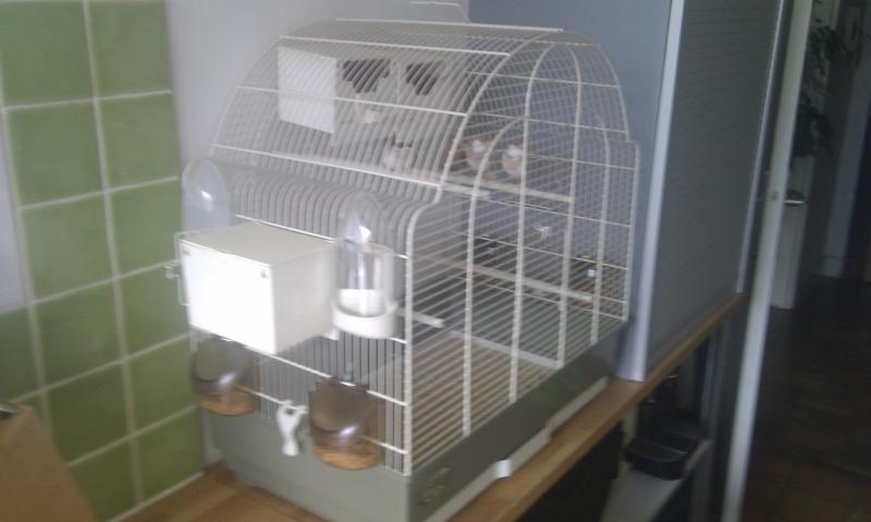 Mes oiseaux et leur maison de retraite Nouvel11
