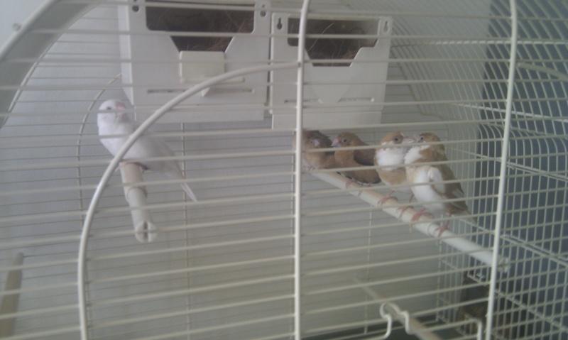 Mes oiseaux et leur maison de retraite Oiseau11