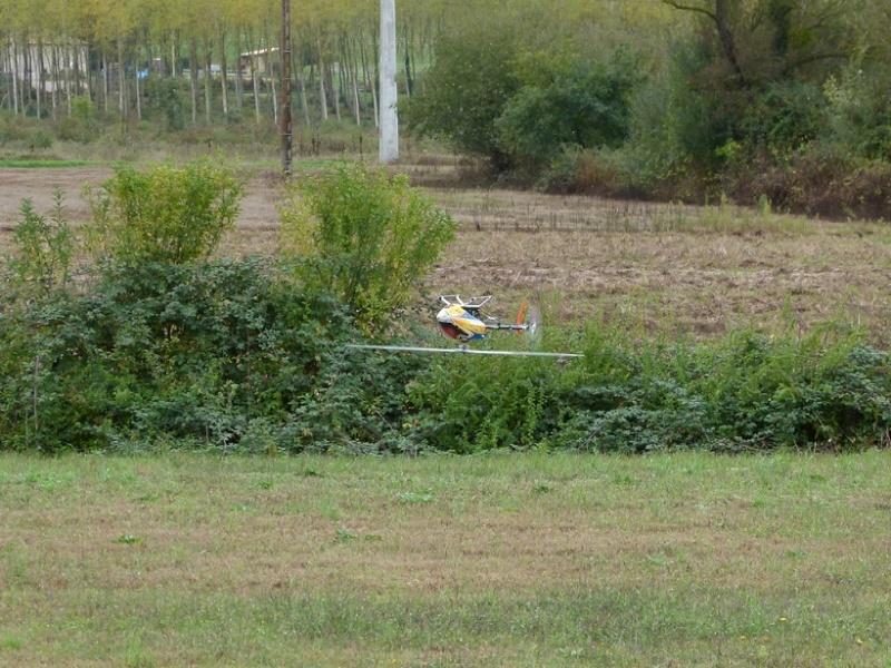 Vol au milieu des oiseaux P1060910