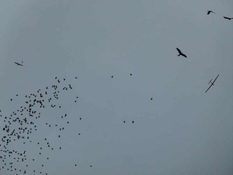 Vol au milieu des oiseaux P1060912