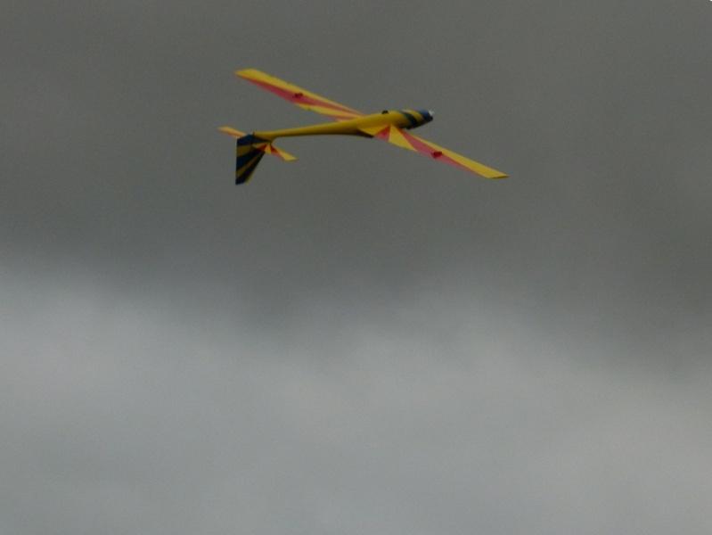 Vol au milieu des oiseaux P1070110