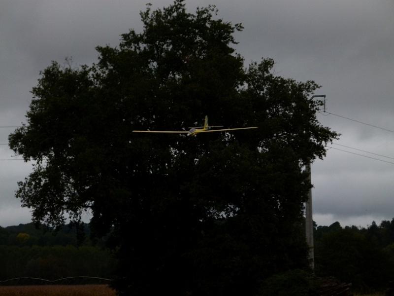 Vol au milieu des oiseaux P1070111