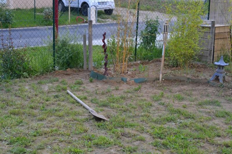 bassin de jardin hors sol Dsc_0413