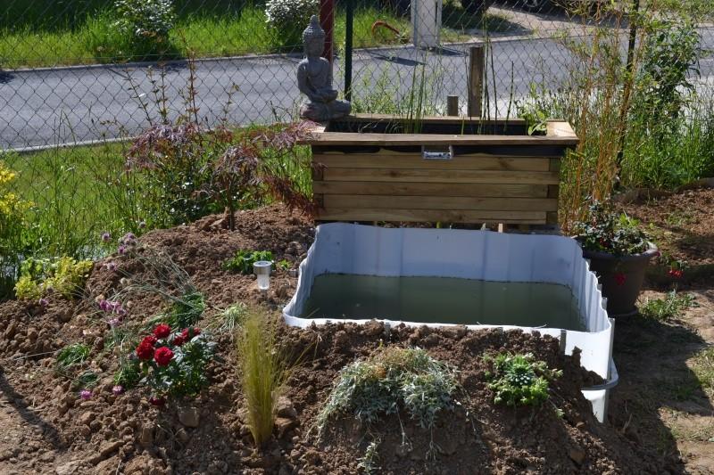 bassin de jardin hors sol Dsc_0419