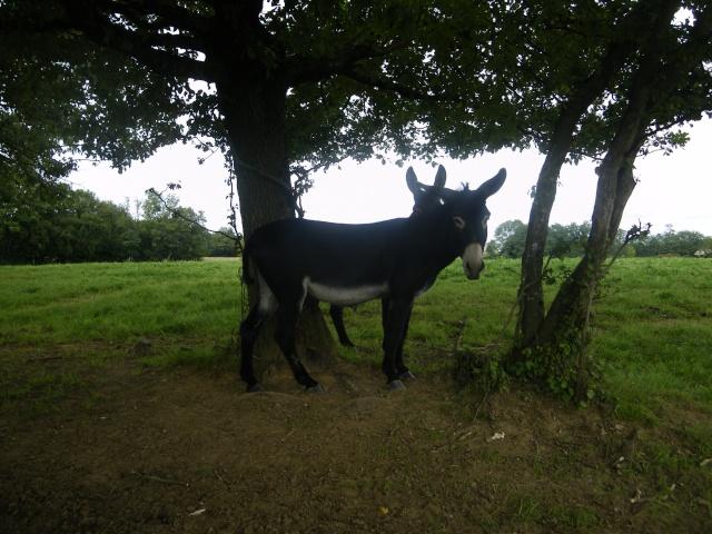 (dpt 71) A ADOPTER, MILAN et ZADIG, ânes communs, en famille d'accueil chez Charly71 - Page 3 Imgp0012