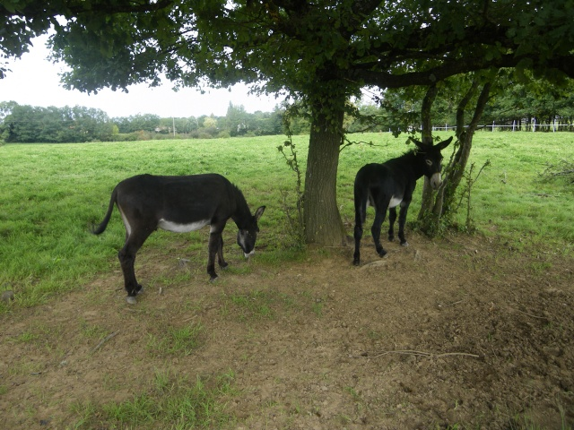 (dpt 71) A ADOPTER, MILAN et ZADIG, ânes communs, en famille d'accueil chez Charly71 - Page 3 Imgp0015