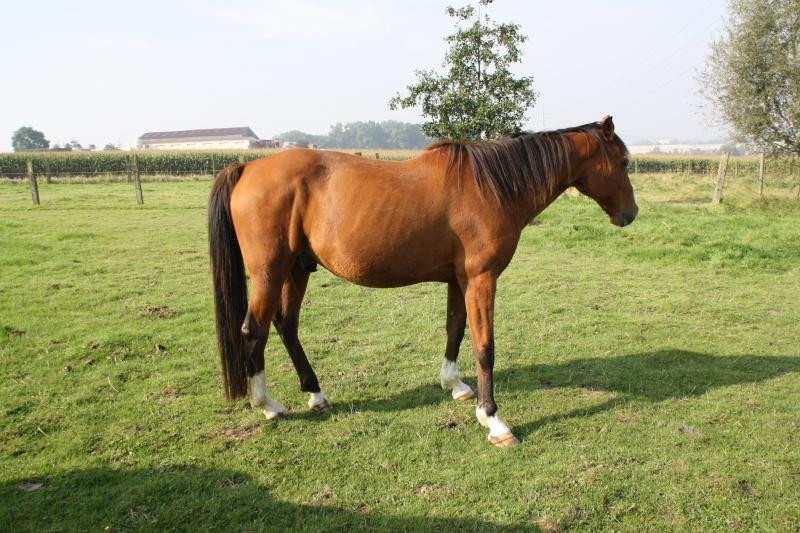 GRIDY - TF né en 1994 - adopté en octobre 2010 Img_1312