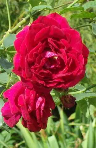 'Red Parfum' !!! 08102013