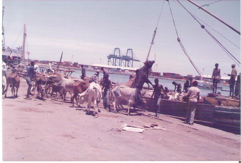 [Campagne] DJIBOUTI - TOME 1 - Page 2 Zebu11