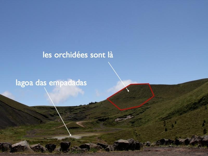 Voyage aux Açores (Sao Miguel) : les platanthères Biotop10