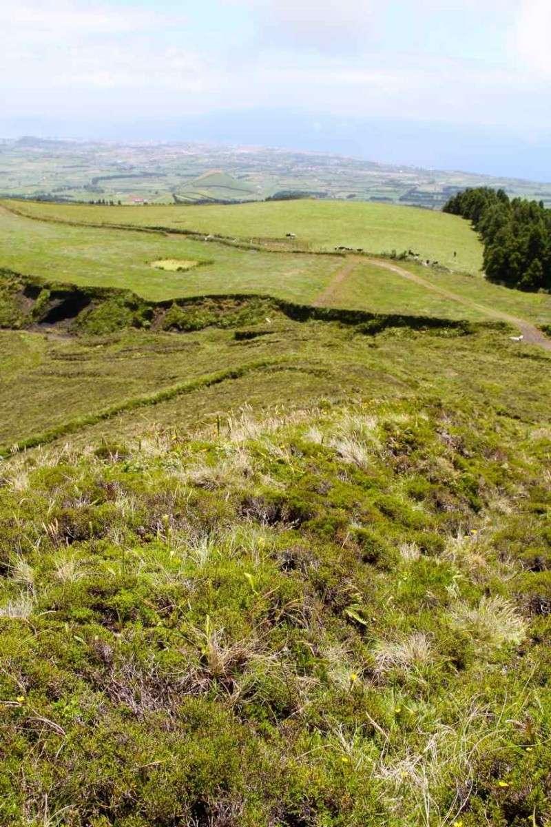 Voyage aux Açores (Sao Miguel) : les platanthères Biotop11